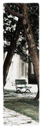 joane-mcdermott-park-bench