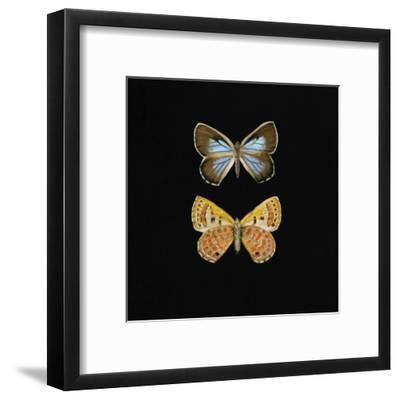 Pair of Butterflies on Black