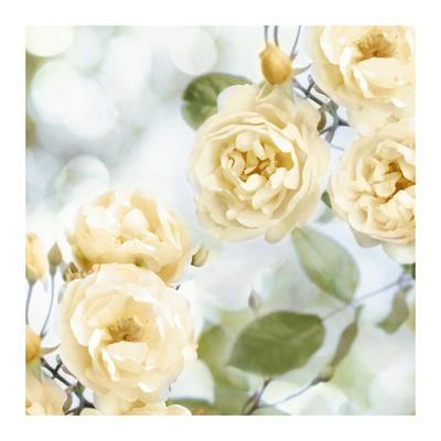 Yellow Rose Garden II