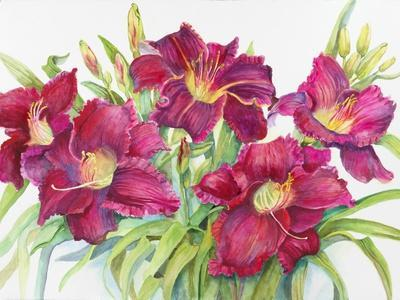 Red Daylilies with Yellow Centers