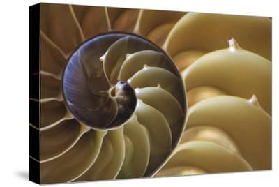 Abstract of a Nautilus Shell, Georgia, USA
