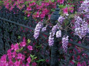 Azaleas and Wisteria Bloom at Bonaventure Cemetery, Savannah, Georgia, USA by Joanne Wells