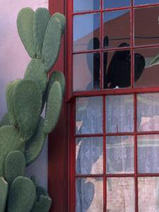 Cactus and Window, Barrio District, Tucson, Arizona, USA by Joanne Wells