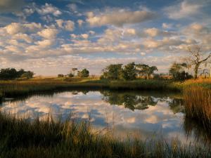 Chimney Creek Reflections, Tybee Island, Savannah, Georgia by Joanne Wells