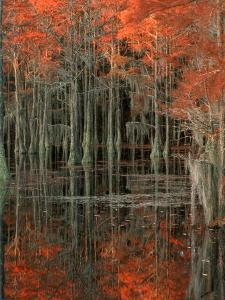 Cypress Swamp with Reflections, George Smith State Park, Georgia, USA by Joanne Wells