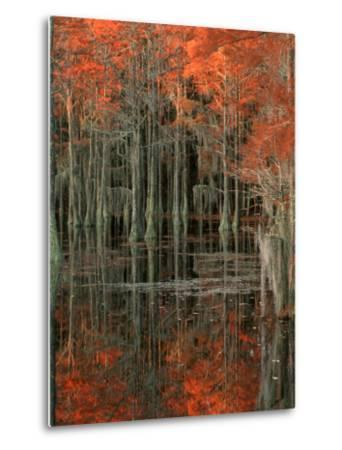 Cypress Swamp with Reflections, George Smith State Park, Georgia, USA