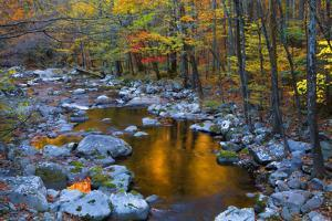 Fall Foliage Along Little River, Smoky Mountains NP, Tennessee, USA by Joanne Wells