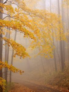 Fog and Autumn Foliage, Great Smoky Mountains National Park, North Carolina, USA by Joanne Wells