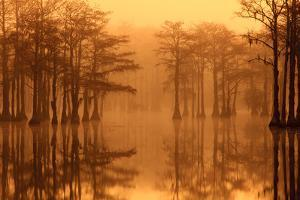 Georgia, Fall Cypress Trees in the Fog at George Smith State Park by Joanne Wells