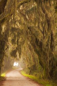 Georgia, Moss Draped Trees Along Laurel Hill Drive in the Savannah National Wildlife Refuge by Joanne Wells