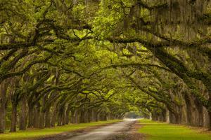 Georgia, Savannah, Mile Long Oak Drive at Historic Wormsloe Plantation by Joanne Wells