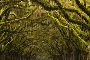 Georgia, Savannah, Oak Lined Drive at Historic Wormsloe Plantation by Joanne Wells