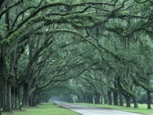 Historic Wormsloe Plantation, Savannah, Georgia, USA by Joanne Wells