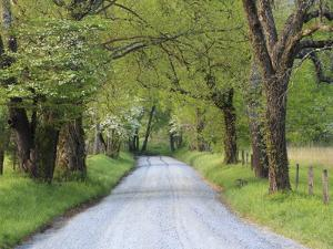 Lane at Cades Cove in the Spring in the Smoky Mountains National Park, Tennessee, Usa by Joanne Wells