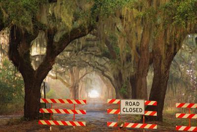 Oak Tree Drive Closed with Barriers, Savannah, Georgia, USA