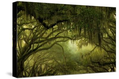 Oak Trees with Spanish Moss, Savannah, Georgia, USA