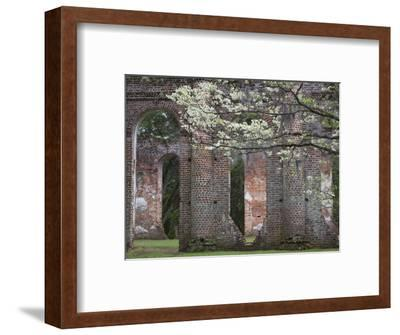 Ruins in the Spring of Old Sheldon Church, South Carolina, Usa