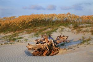 Sea oats on Tybee Island, Georgia, USA by Joanne Wells