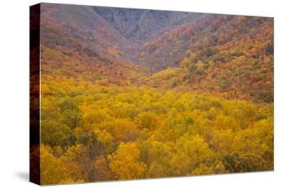 Smoky Mountains National Park, Fall Foliage in the Smoky Mountains National Park