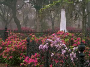 Spring Azaleas at Historic Bonaventure Cemetery, Savannah, Georgia by Joanne Wells