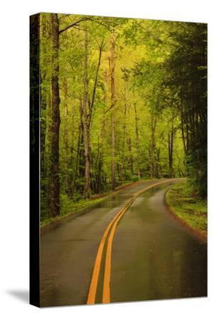 Tennessee, Road at Tremont in the Smoky Mountains NP