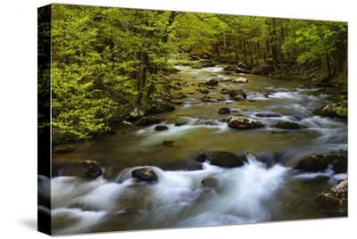 Tennessee, Spring Reflections on Little River at Smoky Mountains NP