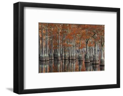 USA, Georgia, Autumn, Cypress Trees at George Smith State Park