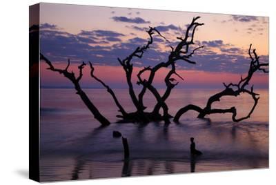 USA, Georgia, Jekyll Island, Driftwood Beach at Sunrise
