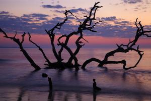 USA, Georgia, Jekyll Island, Driftwood Beach at Sunrise by Joanne Wells