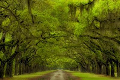 USA, Georgia, Savannah, Drive at Historic Wormsloe Plantation