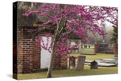 USA, Georgia, Savannah, Red Bud Tree in Colonial Park Cemetery