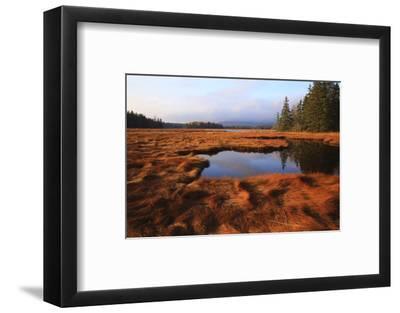 USA, Maine, Marsh Grass and Pond Near Acadia National Park