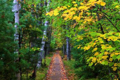 Wooden Walking Trail in Acadia National Park, Maine, USA