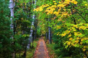 Wooden Walking Trail in Acadia National Park, Maine, USA by Joanne Wells