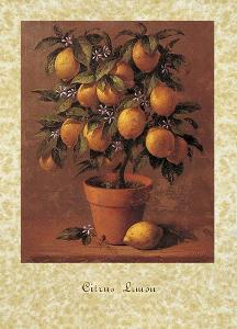 Lemon Tree by Joaquin Moragues