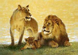 Lions by Joaquin Moragues