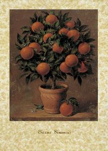 Orange Tree by Joaquin Moragues