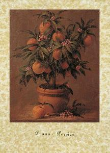 Peach Tree by Joaquin Moragues