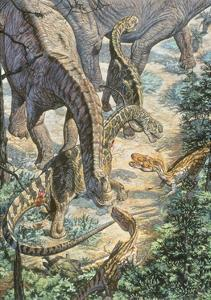 Jobaria Sauropods and Afroventor Raptors of the Mid-Cretaceous Period