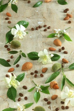 Orange and Almond Blossom, Coffee Beans and Almonds by Jocelyn Demeurs