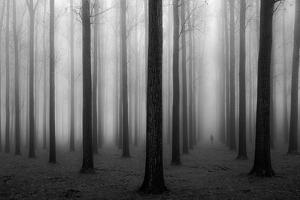 In a Fog by Jochen Bongaerts