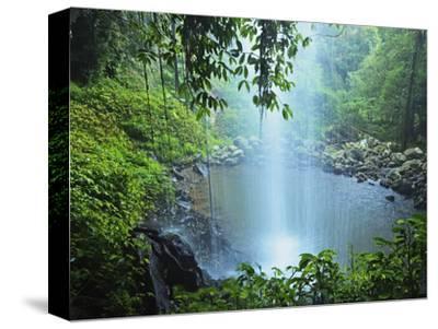 Crystal Shower Falls, Dorrigo National Park, New South Wales, Australia, Pacific
