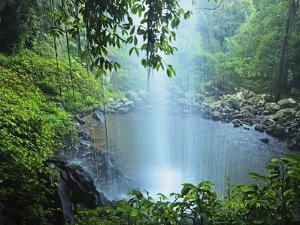 Crystal Shower Falls, Dorrigo National Park, New South Wales, Australia, Pacific by Jochen Schlenker