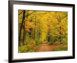 Forest in Autumn, Schoenbuch, Baden-Wurttemberg, Germany, Europe by Jochen Schlenker