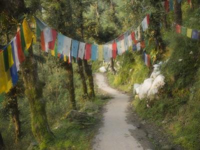 Path and Prayer Flags, Mcleod Ganj, Dharamsala, Himachal Pradesh State, India by Jochen Schlenker