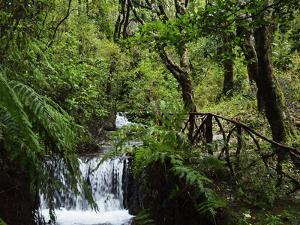 Rainforest, Queimadas, Madeira, Portugal, Atlantic Ocean, Europe by Jochen Schlenker