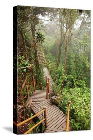 The Mossy Forest, Gunung Brinchang, Cameron Highlands, Pahang, Malaysia, Southeast Asia, Asia