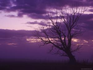 Tree, Alexandra, Central Otago, South Island, New Zealand, Pacific by Jochen Schlenker