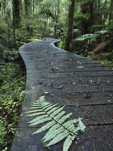 Walkway Through Swamp Forest, Ships Creek, West Coast, South Island, New Zealand, Pacific by Jochen Schlenker