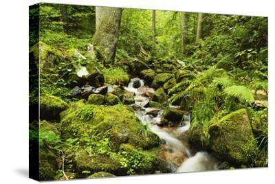 Windberg Waterfall, Near St. Blasien, Black Forest, Baden-Wurttemberg, Germany, Europe